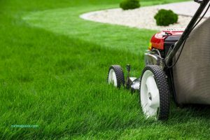 affordable lawn mowing Adelaide