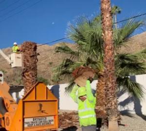 Palm Tree Removal Perth